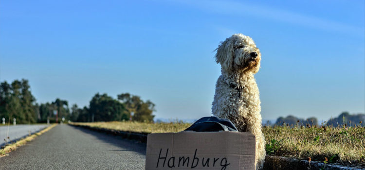 Safe Travel with Pets
